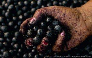 Photo de João-Luiz Bulcão - açai, fruit de l'açaizeiro - Les Gardiens de l'Amazonie - 2011