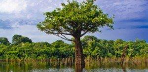 expédition en Amazonie