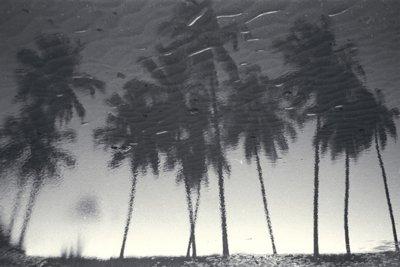 bm-coconuts-beach-21