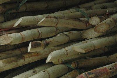 bm-sugare-cane-brasil-2