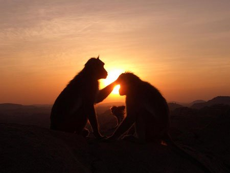 monkey sunset