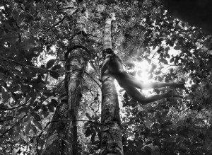 Amazonas book pp. 448/449