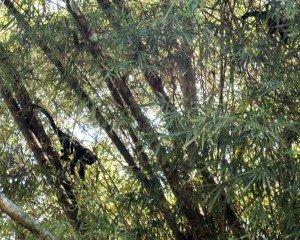 2015.08.07 © ivanlma jardim botânico para Irene Danon WEB