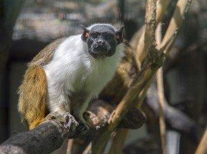 animais-em-extincao-na-floresta-amazonica15
