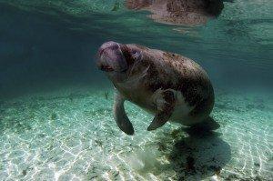 animais-em-extincao-na-floresta-amazonica2