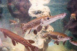 animais-em-extincao-na-floresta-amazonica3