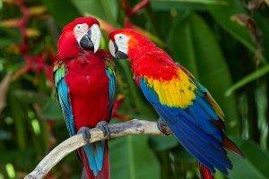 animais-em-extincao-na-floresta-amazonica4