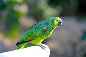 animais-em-extincao-na-floresta-amazonica7