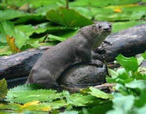 animais-em-extincao-na-floresta-amazonica9