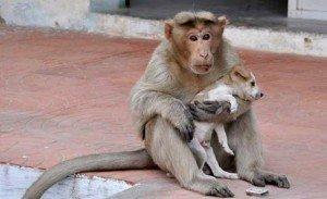 macaco e cao