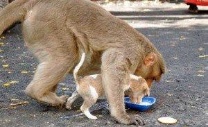 macaco e cao3