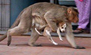 macaco e cao5