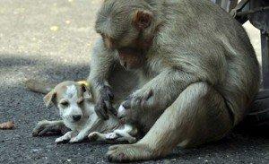 macaco e cao6