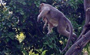 macaco e cao7