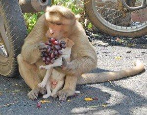 macaco e cao8